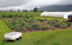 Syarat Pendirian Usaha Bunga dan Tanaman Hias