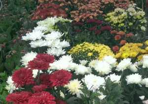 Pemasaran Bunga Potong