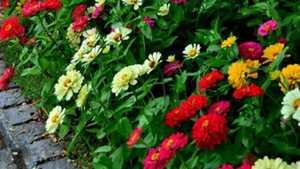 Resiko Usaha Bunga Potong