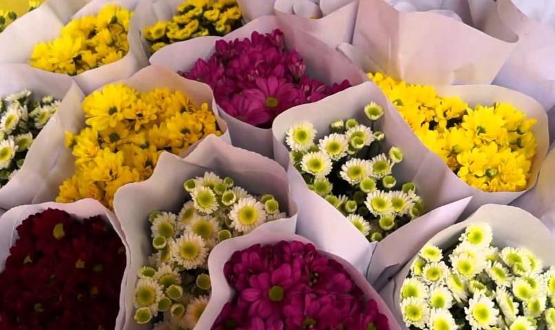 Prospek Usaha Bunga Potong Dan Tanaman Hias Pustakadunia Com