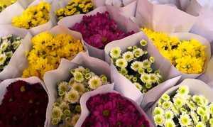 Prospek Usaha Bunga Potong dan Tanaman Hias
